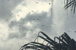 Người che chở chim trời