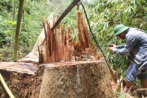 Bắt giam hai cán bộ kiểm lâm vì để mất rừng