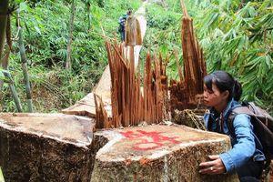 Bắt tạm giam Trạm trưởng Trạm Quản lý bảo vệ rừng Chà Vàl