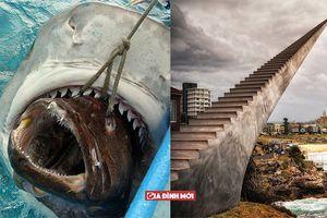 15 hình ảnh thực tế siêu ảo không cần Photoshop