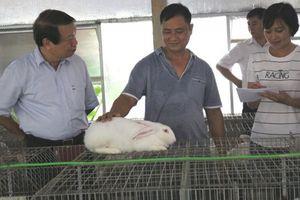 Hợp tác chăn nuôi thỏ cho thu nhập ổn định