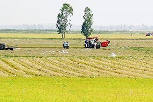 Bộ NN-PTNT và Bộ TN-MT đề nghị Chính phủ thí điểm 'tích tụ ruộng đất'