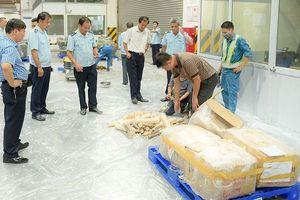 Triệt phá đường dây vận chuyển gần 1 tấn ngà voi, vảy tê tê