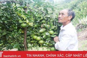 Người dân Đức Bồng chuẩn bị 'cân cam, đếm tiền'