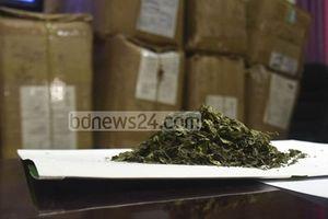 Chiến dịch chống ma túy 'khat' có nguồn gốc châu Phi