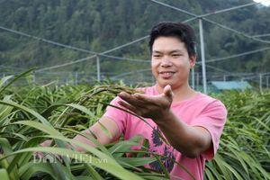 'Phát hờn' với vườn lan Trần Mộng tiền tỷ của 8X Sa Pa