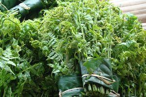 Những loại rau mọc dại cực tốt cho sức khỏe