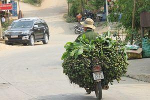 Giá cau tăng không tưởng, mang tiền tỷ cho người trồng