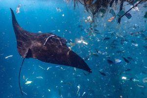 Ảnh động vật: Cá giữa biển ni lông, bò in bóng mặt trăng...