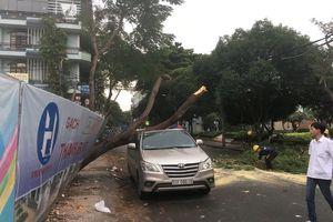 Cây xanh ngã đè bẹp ô tô trên phố Sài Gòn