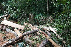 Huế: Công an vào cuộc điều tra vụ rừng A Lưới bị tàn phá nghiêm trọng