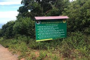 Giải mã những vụ 'mất tích' bí ẩn trên bán đảo Sơn Trà