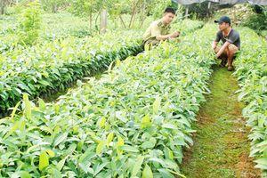 Lào Cai: Quyết tâm hoàn thành mục tiêu trồng rừng năm 2018