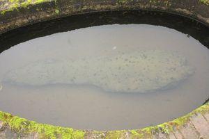 Cá đá 'cõng hồn' ở Hưng Yên và chuyện thật về 'hồn Trương Ba, da hàng thịt'