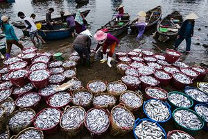 Quảng Ngãi: Ngư dân xã Tịnh Kỳ trúng đậm cá cơm