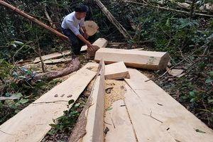Đối tượng vận chuyển gỗ lậu đến cơ quan công an đầu thú