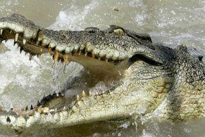 Cú đớp tử thần của cá sấu khổng lồ với kẻ xâm phạm lãnh thổ