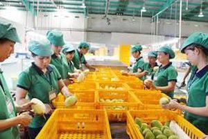 Khó thực hiện bảo hộ SHTT đối với trái cây xuất khẩu