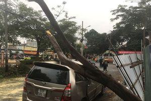 TP.HCM: Cây lớn đổ đè bẹp xe ô tô, nhiều người hoảng loạn