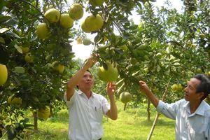 Bảo tồn giống cây ăn quả đặc sản: Việc cần thiết