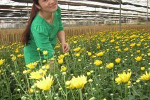 Chiềng Xôm và những vườn hoa đẹp nhất tỉnh Sơn La