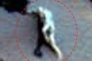 Ảnh nghi xác khủng long trên sao Hỏa?