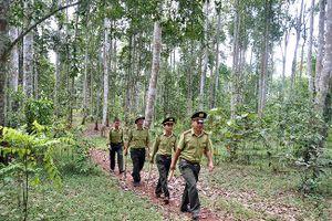 Phê duyệt Đề án Quản lý rừng bền vững và Chứng chỉ rừng