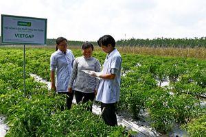 UNIBEN hỗ trợ nông dân thực hiện VietGAP, sản xuất rau an toàn