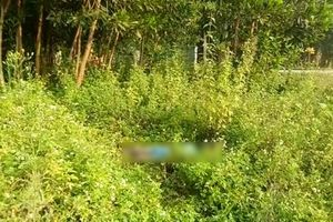 Thanh Hóa: Tá hỏa phát hiện thi thể người đàn ông phân hủy trong bụi cỏ