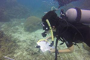 Sáng kiến khảo sát rạn san hô ghi lại sự cố ô nhiễm biển