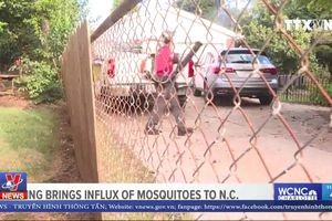 Bùng phát dịch muỗi sau bão Florence