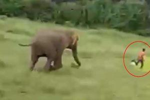 Clip: Voi rừng truy sát, giẫm đạp nam sinh chết thương tâm