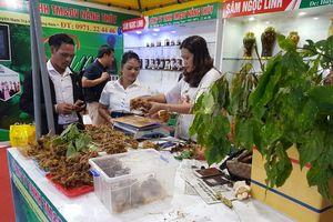 Chợ phiên sâm núi Ngọc Linh thu 4,2 tỷ đồng
