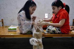 3 chị em tàn tật nổi tiếng trong cộng đồng mạng Trung Quốc