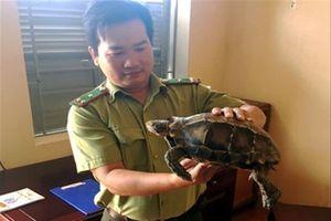 Thả rùa quý hiếm về rừng đặc dụng Đăk Uy