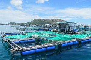 Hoàn thiện chính sách giao các khu vực biển cho tổ chức, cá nhân
