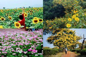 4 mùa hoa rực rỡ, nở từ tháng 10 chào mời du khách tới thăm