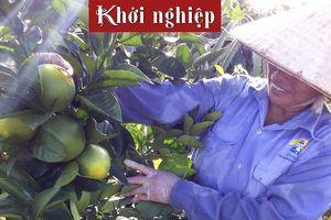 Nữ nông dân Hải Hậu thu nhập hơn trăm triệu/năm từ cây ăn trái