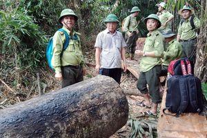 Quảng Nam chấn chỉnh lại công tác bảo vệ rừng