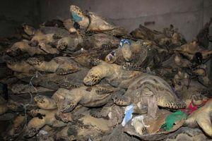 Đề xuất không đem bán tang vật tịch thu được từ các vụ buôn bán động thực vật hoang dã