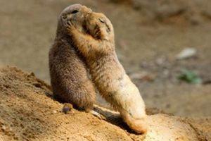 Bất ngờ với khả năng giao tiếp 'cao cấp' hơn người của động vật