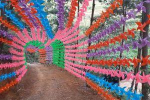 HOT: Con đường chong chóng đầy sắc màu, đẹp như miền cổ tích ở Lai Châu đang khiến dân tình điên đảo