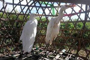 Những chiêu độc tận diệt chim trời ở Thừa Thiên - Huế