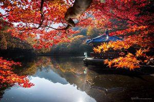 Mãn nhãn ngắm mùa lá đỏ Hàn Quốc tuyệt đẹp dịp thu về