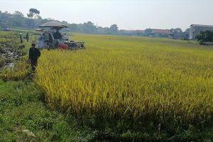Ai bảo kê máy gặt ở thị trấn Lâm Thao khiến nông dân phẫn nộ?