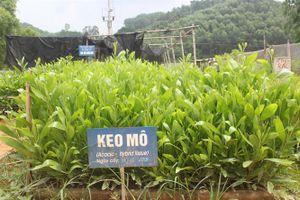 Khuyến cáo trồng rừng