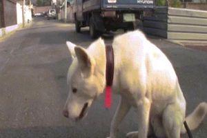 Chú chó ngoan ngoãn lễ phép khiến dân mạng 'phát cuồng'