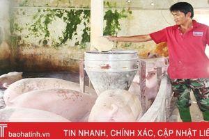 Thịt lợn ngon, tiết kiệm chi phí nhờ sử dụng cám trộn sinh học