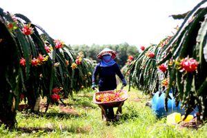 BẢN TIN TÀI CHÍNH-KINH DOANH: Ngành thép Việt gặp khó khăn lớn, giá thanh long 'tụt dốc không phanh'