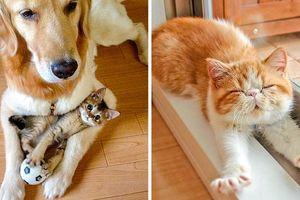 25 bức ảnh chứng minh mèo là sinh vật đáng yêu 'nhất quả đất'
